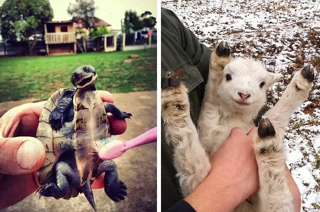 Позитивные фото с животными)