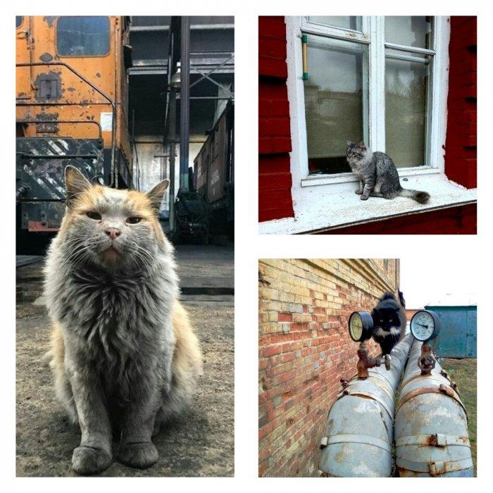 Блюз бродячих котов