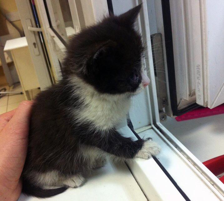 Мама-кошка вынесла из подвала и умоляла людей забрать единственного выжившего котенка