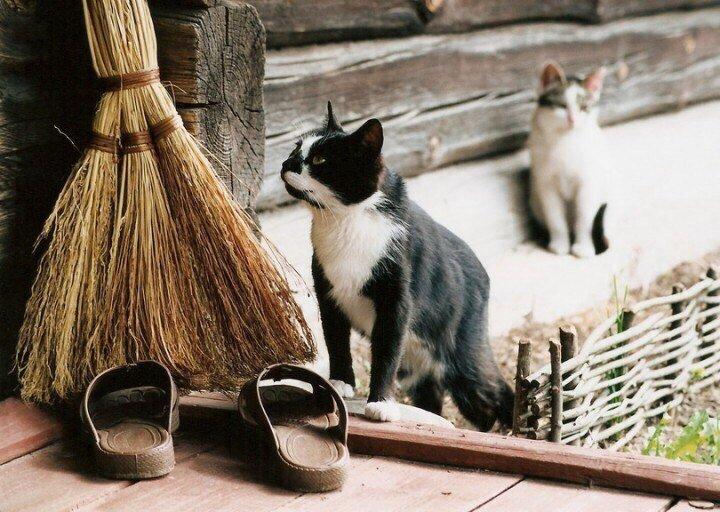 Деревенские коты как отдельн…