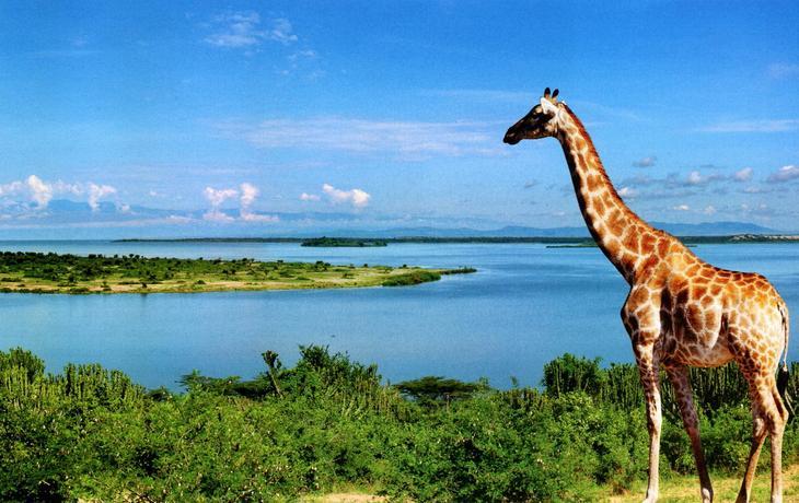 Виза и как добраться. 12 фактов об Уганде - жемчужине Африки. Фото с сайта NewPix.ru