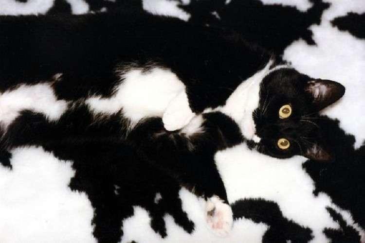 Пушистые гении маскировки – 20 кошек, которые обыграют в прятки любого! У нас нет шансов!