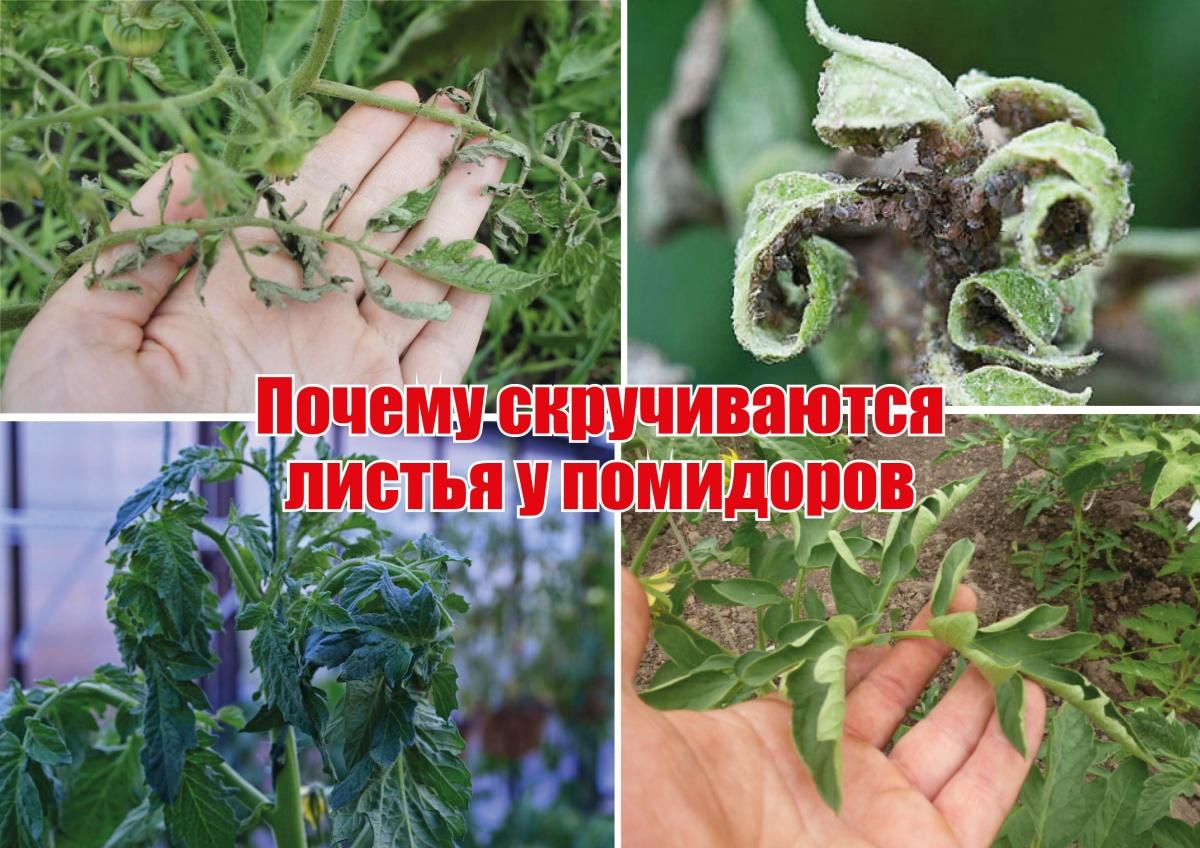 схема маринад овощной с томатом