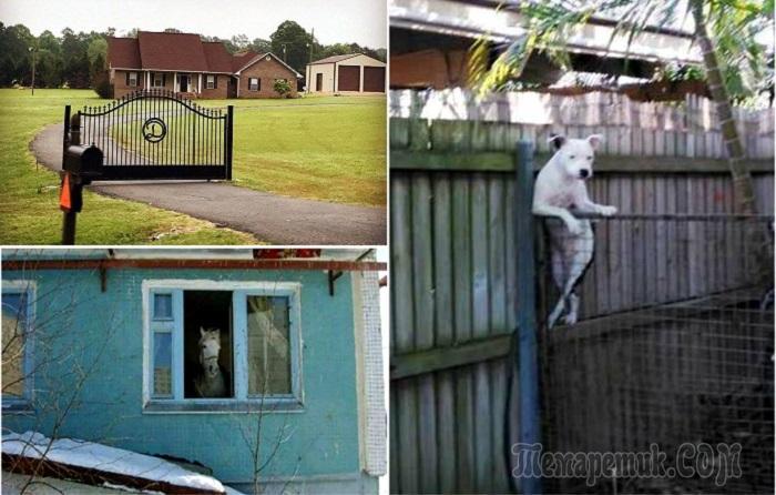 16 экстравагантных соседей, …