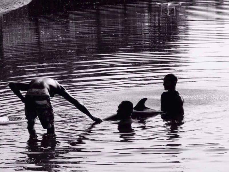 05-surfistas-delfin
