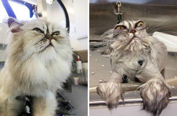 Если твой кот тебя пугает, просто добавь воды