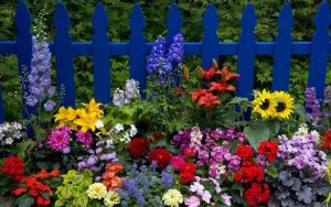 Красивые цветы в саду