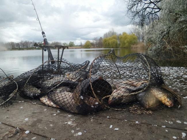 Хитрость бывалых рыболовов – чесночные стрелки