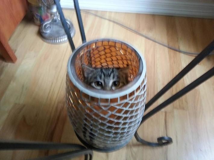 Место для кошки