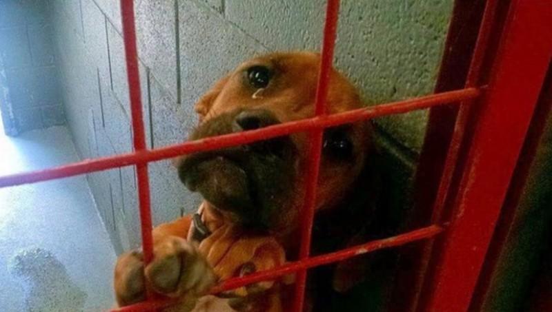 Фото этой печальной собаки разлетелось по Интернету и всего за несколько дней ее жизнь изменилась навсегда