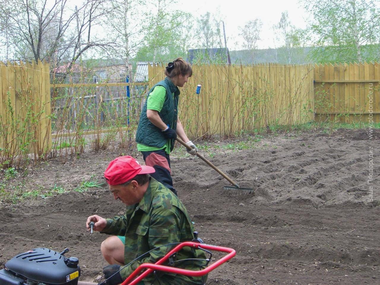 Как я решала проблему полива огорода