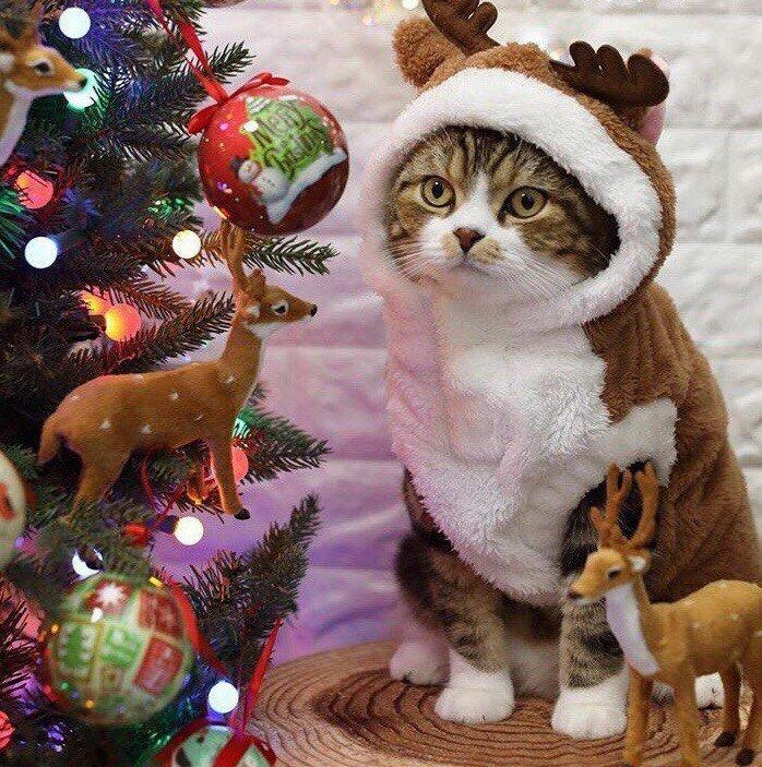 Котики к празднику готовы!