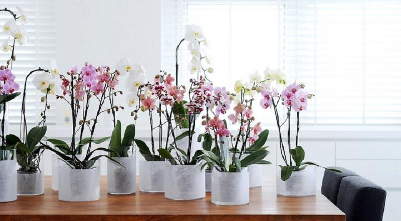 помести в горшок с орхидеей кубики льда. Через неделю произойдёт чудо!