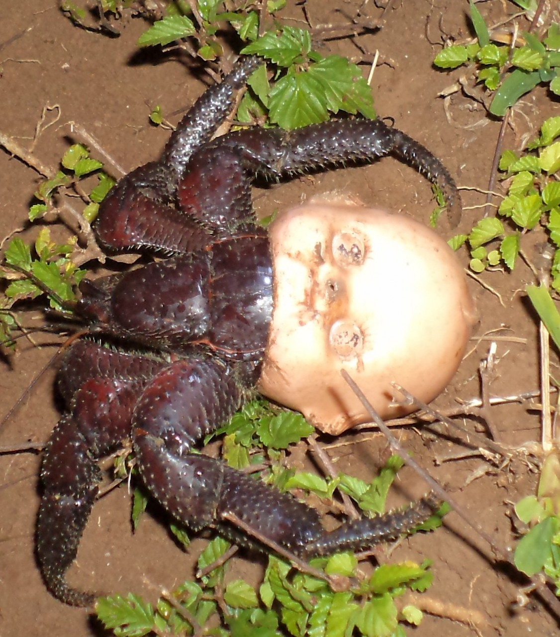 Мусорная катастрофа: рак поселился в голове куклы