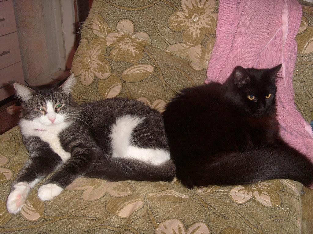 Муся и Барсик