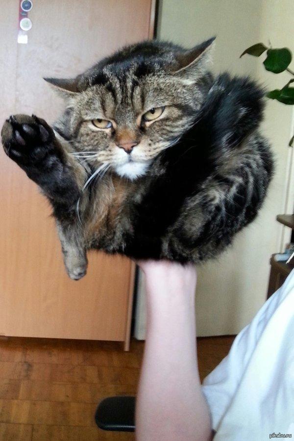 Пластилиновые коты коты, прикол, юмор