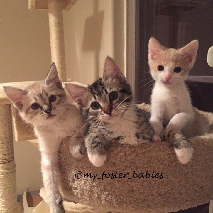 """""""Он пил молоко без остановки!"""" Хрупкий бездомный котенок приходит в новую семью – и понеслось"""