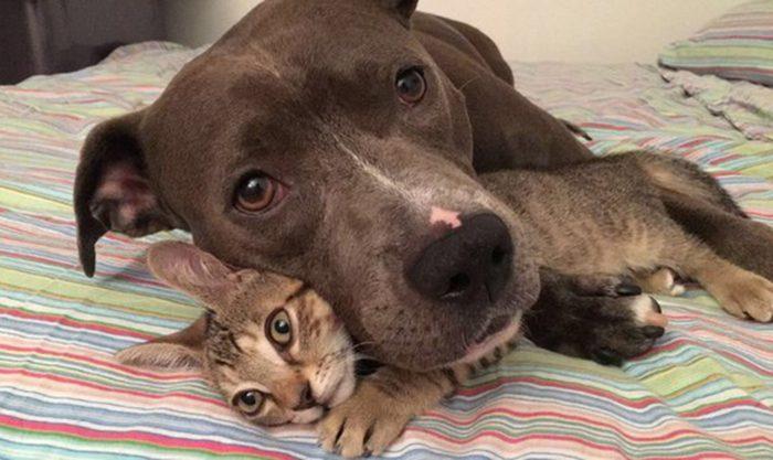Животные, которые не знают, что можно ссориться