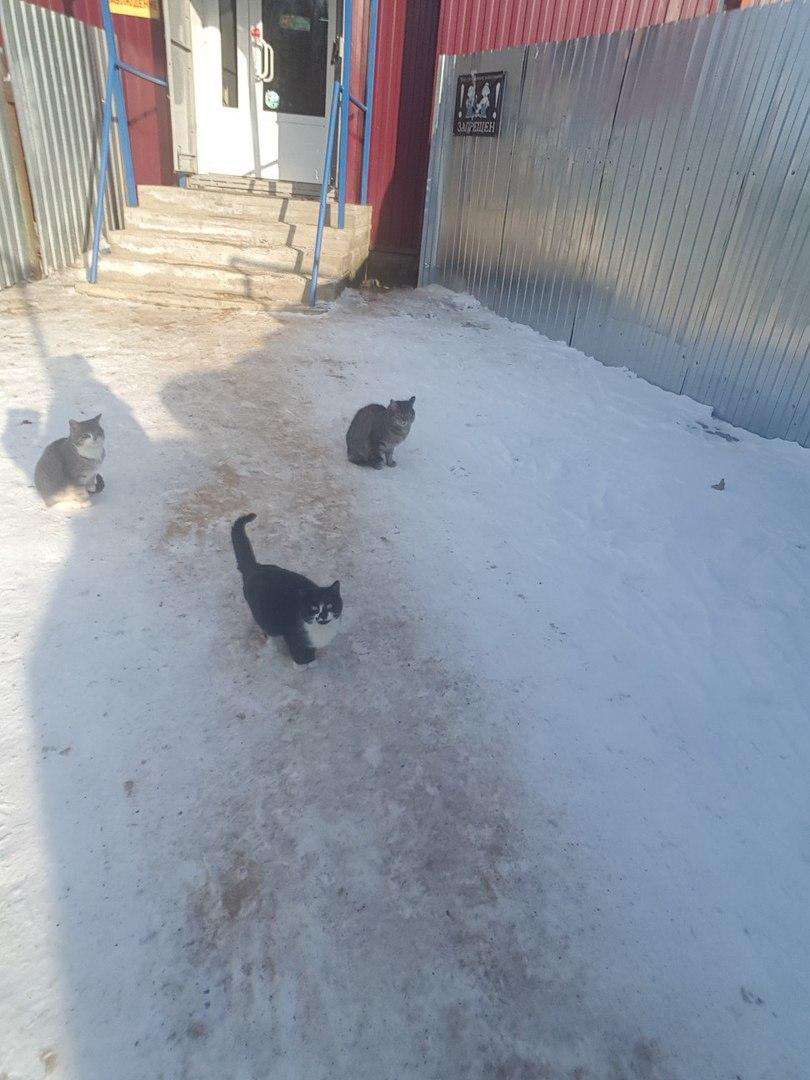 Всё там же живут, а точнее выживают, голодные кошки...