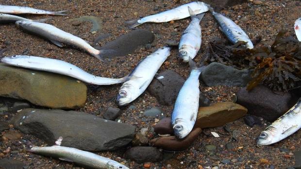 Ученые не могут понять, что вызывает массовую гибель морских животных в Канаде