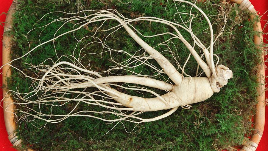 Женьшень – корень жизни