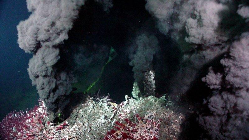 В океанах существуют свои «мегаполисы», в которых кипит жизнь интересное, мировой океан, океан, факты