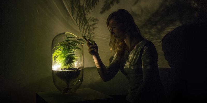 «Живой свет» — растения-лампы
