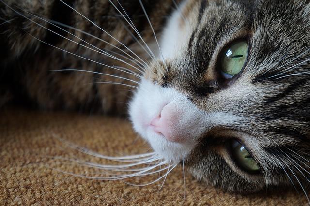 9 признаков того, что ваш кот любит вас!
