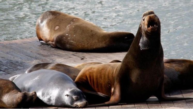 Аквапарк в США закрыли из-за морского льва, укусившего посетителя за половой орган