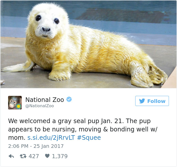 Zoos Get Into Brutal #CuteAnimalTweetOff Battle, And It's Exactly What The Internet Needed