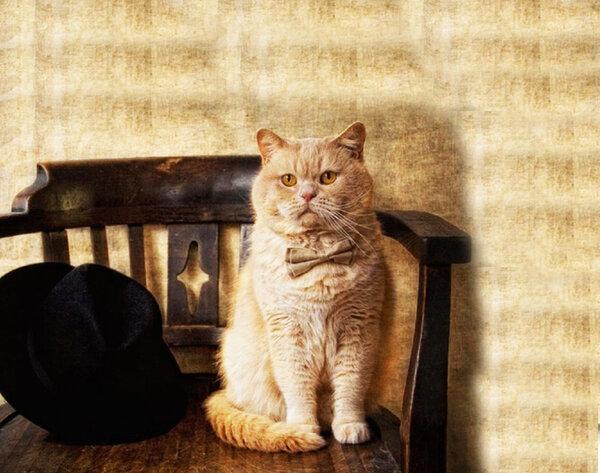 Дачная история о тёще, кошке, кролике и соседе, не пьющем «на халяву»
