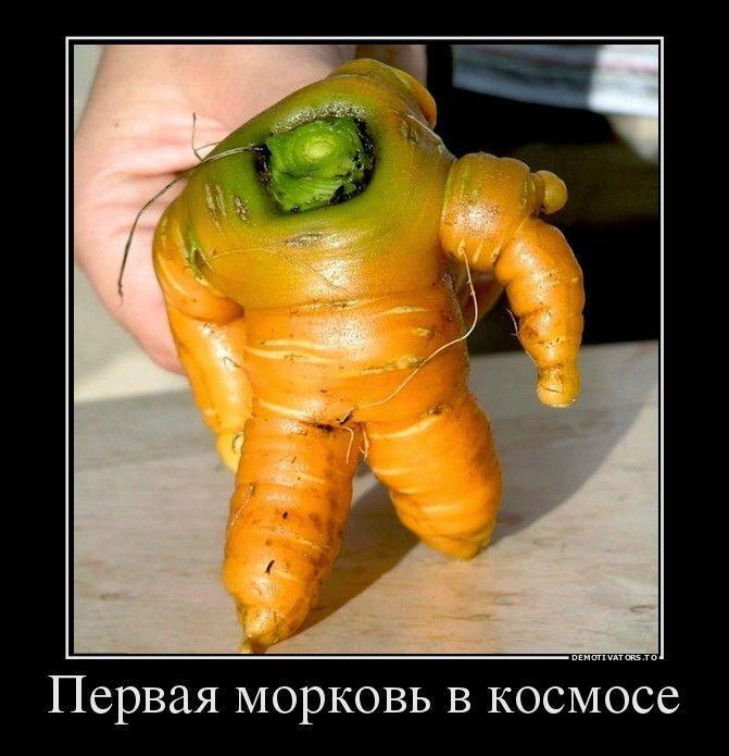 Первая морковь в космосе демотиватор, демотиваторы, жизненно, картинки, подборка, прикол, смех, юмор