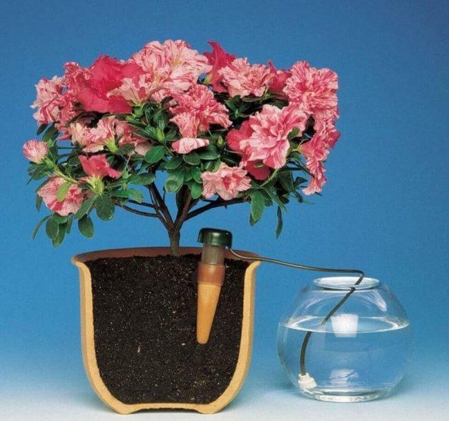 Капельная система полива своими руками для комнатных растений своими руками фото 221