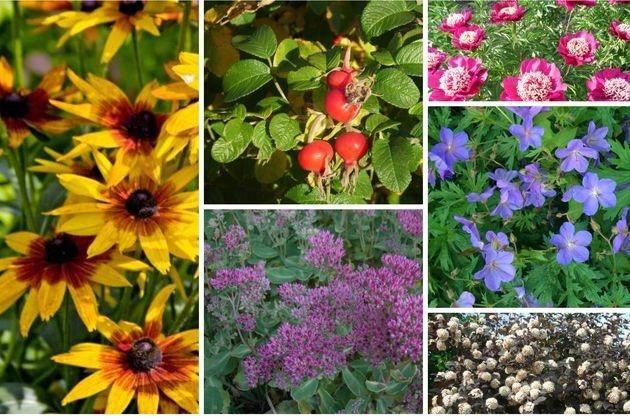 7 незаменимых растений для наших садов