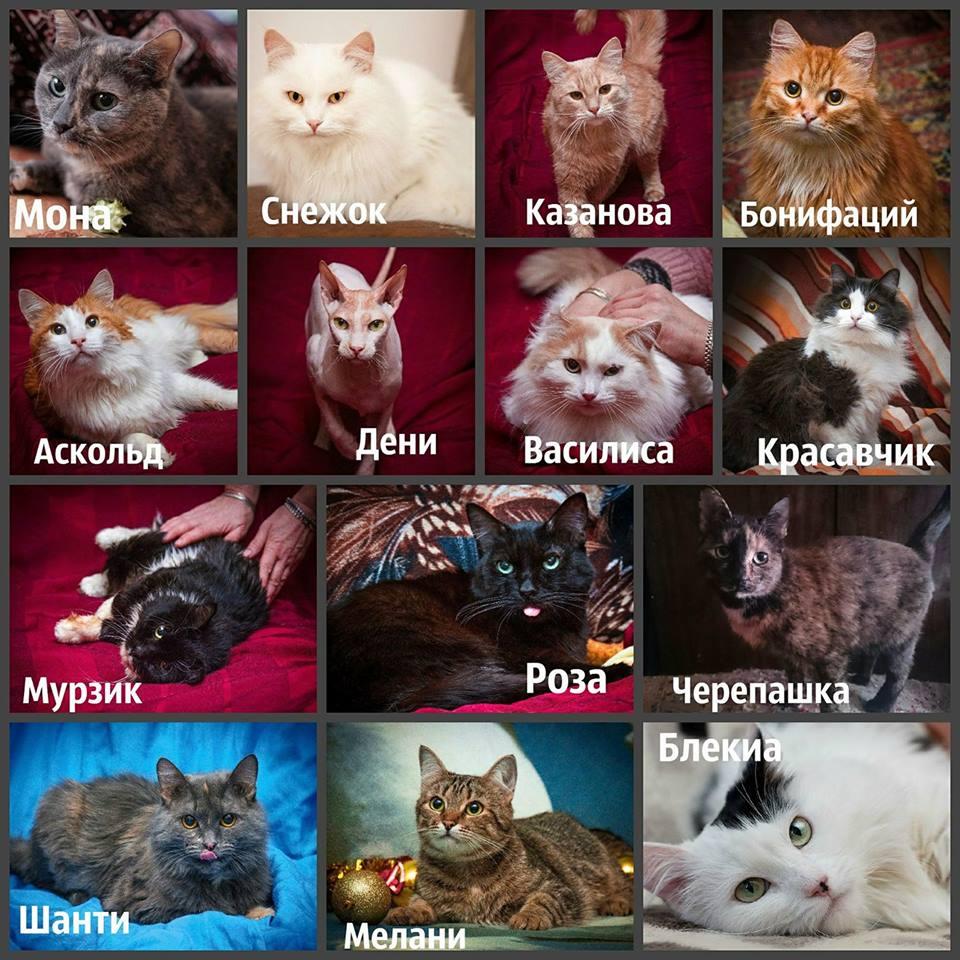 Смогут ли особенные кошки стать домашними?