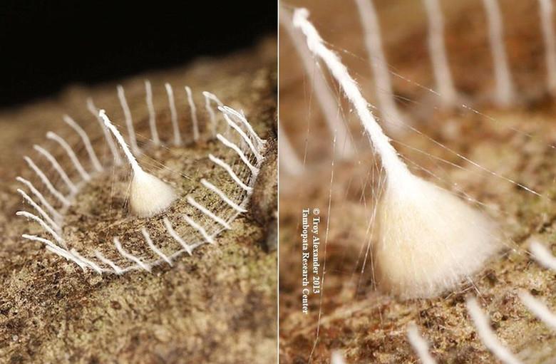 Тайна необычной паутины в Перу продолжает интриговать ученых