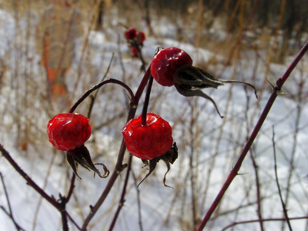 Пережившие зиму