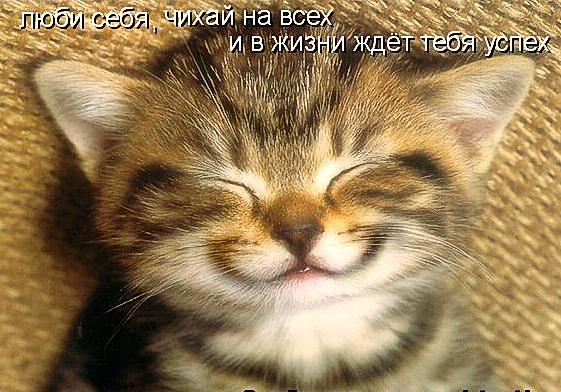 Котоматрицы великолепные, каждая с доброй улыбкой!!!
