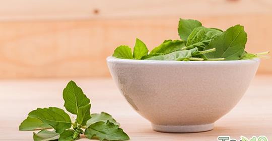 Польза базилика для здоровья и факты о питании