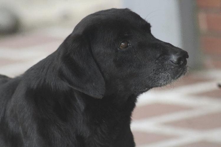 Наблюдательный пес научился покупать себе еду в магазине за листики с деревьев