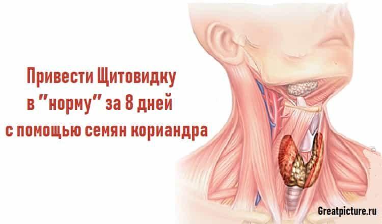 Привести Щитовидку в ″норму″