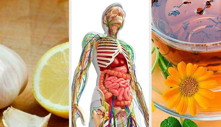 6 натуральных средств для детоксикации лимфатической системы