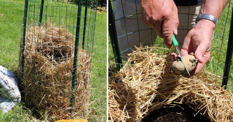 Вот как собрать невероятный урожай картофеля с четырёх соток