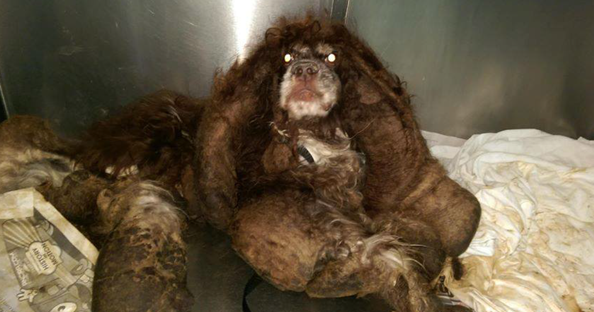 Dog Found Abandoned On The Road Gets 6 Pounds Of Mats Removed