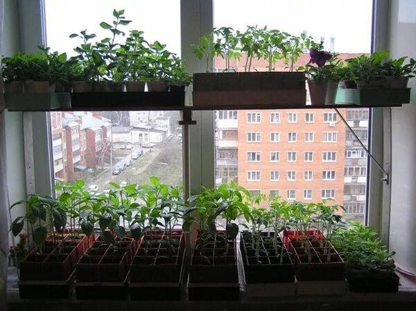 Чем и как досвечивать рассаду и почему это необходимо