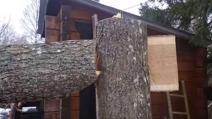 Как заставить спиленное дерево упасть в нужном направлении