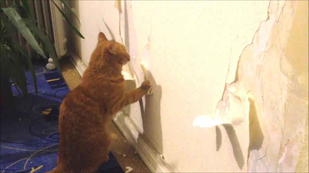 кот подрал входную мягкую дверь товара всей России