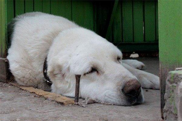 Как собаки становятся убийцами... Задумайтесь, люди, что вы творите!