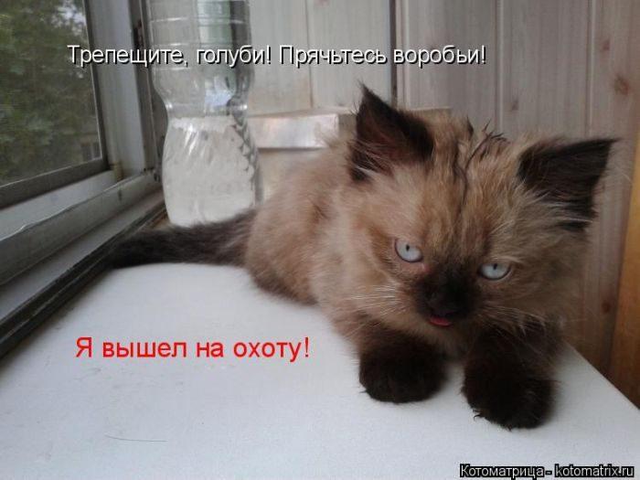 Самые весёлые котоматрицы))