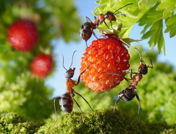 Вас донимают муравьи? Избавимся от этой проблемы